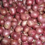 Harga Jual Komoditi Bawang Merah Ditingkatan Petani di Boyolali Mengalami Kenaikan Dengan Harga 20 Ribu Rupiah Perkilogram